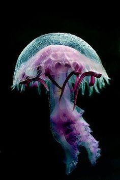 Purple jelly More