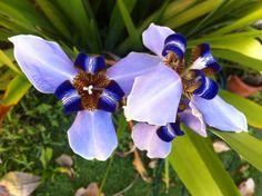 OVNI: orquídea violeta não identificada