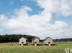 Chickens gather at the coops | archdigest.com