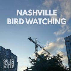 Oh, So Nashville Laughs: Bird Watching - www.ohsonashville.com, Nashville Humor, Nashville Snark