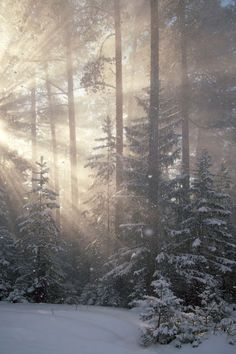 Beautiful Winter and Sun beams