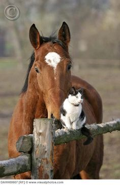 horses and cats Pretty Horses, Horse Love, Beautiful Horses, Animals Beautiful, Farm Animals, Animals And Pets, Cute Animals, Image Chat, Mundo Animal