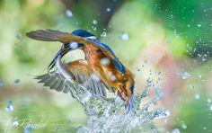 Gotcha! by Max Rinaldi on 500px