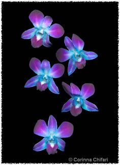 Google Image Result for http://www.corinnachifari.com/uploads/processed/0942/0910131208541turquoise_purple-orchid_01_car.jpg