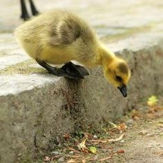 You have to love these cute animal pictures because they're so fluffy, small and playful. Most of the ones found in these pictures are pets, those tiny souls Beautiful Photos Of Nature, Beautiful Birds, Nature Pics, Animals Beautiful, Beautiful Pictures, Like Animals, Baby Animals, Adorable Animals, Small Animals