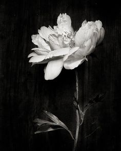 Botanical Black and White No. 5807 #luvocracy #design #photography #floral