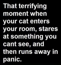 If it scares the cat    :/