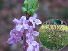 10 pięknych roślin, które warto mieć w ogrodzie Plants, Inspiration, Home Decor, Gardening, Lavender, Biblical Inspiration, Decoration Home, Room Decor, Lawn And Garden