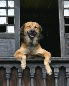 31 Hunde, die gerade total bekifft sind