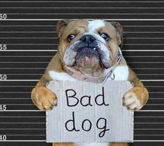 200 Bulldog Beauties Ideas Bulldog English Bulldog Bulldog Art