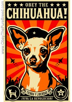 Chihuahua poster - need this for my house but the question remains which chihuahua I have 4