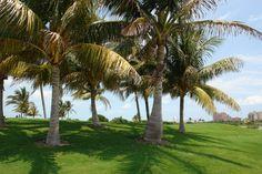 http://ariapuertocancun.net   Aria Puerto Cancún desarrollo de lujo frente a la marina, y a unos pasos del Club de Golf de Puerto Cancún, disfrute la vida marina y del placer de jugar Golf.  #realestate #bienesraices #mar #oceano #inversiones #lujo #home #waterfront #ocean #veleros #yates