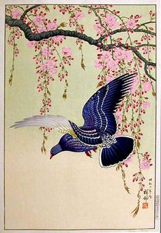 Cherry Blossoms and Pigeon by Ohara Koson, 1931 (published by Watanabe Shozaburo)