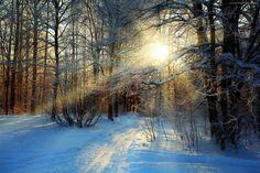 Las, Drzewa, Ścieżka, Promienie, Słońca, Zima