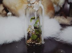 The Curio Vial is filled with:  Dried flowers, ferns & leaves Bird bones mice bones muss  Curio vial sealed with light pink color wax.  Due the glass reflection, pictures can't show how pretty it is. This glass jar has been filled with collected species that I have found in nature. None ...