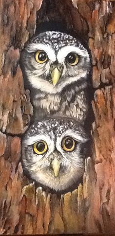 Doubly Wise Owls - Acrylic & Impasto on Canvas 30x60cm (Sold)