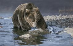 Rosemary Millette bears - riverwind gallery presents art from the best!