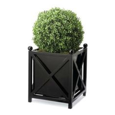 simple formal box planter with round topary
