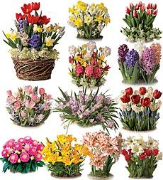 Wow Them With A Gift That Gives All Year Long. Twelve Months Of Flower  Gardens