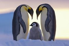 Animals - Family - Photography - Quotes