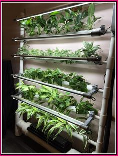 Indoor Hydroponic Wall Garden 23 There are so many new and interesting things coming up in this area! Aquaponics System, Hydroponic Farming, Hydroponic Growing, Growing Plants, Indoor Hydroponics, Hydroponic Tomatoes, Vertical Hydroponics, Aquaponics Greenhouse, Aquaponics Plants