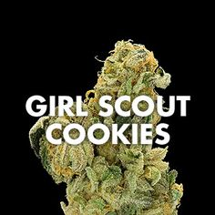 Much of the history behind Girl Scout Cookies is kept secret by its proprietors. It's generally accepted that GSC originated as a hybrid strain, combining OG Kush with a cross of Durban Poison and a strain called F1.