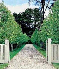 Love this driveway, pleached hedging and fence - Paul Bangay