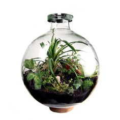 50 Liter Bio-Dome / Mac Nettles #plant