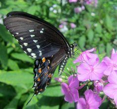 Birdbath Soup: Butterflies