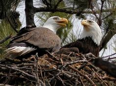 Eagle Watch Weekends 2015 - Take a guided tour and get a closer look at these majestic birds!