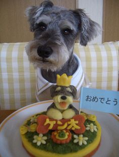 dog-birthday-cake - adorable schnauzer!
