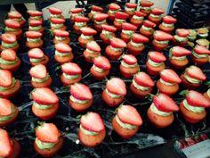 Sheraton Walkerhill - Very Berry Strawberry