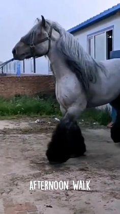 Cute Wild Animals, Pretty Animals, Cute Little Animals, Cute Funny Animals, Animals And Pets, Cute Dogs, Funny Horses, Cute Horses, Pretty Horses
