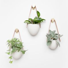 hanging plants indoor A floating garden in polished matte porcelain. This planter elevates your room and accentuates the beauty of your plants with its simple presence and clean c Bathroom Red, Bathroom Plants, Plants In Bedroom, Indoor Planters, Hanging Planters, Wall Hanging Plants Indoor, Diy Wall Planter, Hang Plants On Wall, Wall Plant Pot