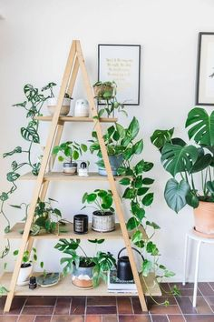 Indoor plant stands have a dual function; they support plants and they act as home decor items. Choosing the right plant stand is a fun, creative process. Wood Projects For Beginners, Diy Wood Projects, Woodworking Projects, Backyard Projects, Easy Projects, Plant Projects, Green Woodworking, Japanese Woodworking, Woodworking Garage