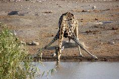 Safari Etosha Namibia portada