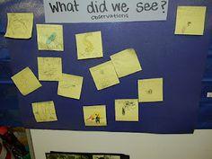 Observation charts: Science in Kindergarten :)