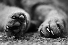 Paws by Marta Tettamanti on 500px