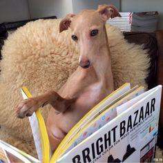 Dante reads Bright.Bazaar's book