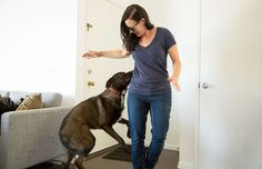 Training Tips To Stop Your Dog From Going Crazy When People Are At The Door - Petcha