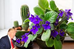 TrumpReviews is back! Republican presidential candidate Donald Trump reviews 6 different types of houseplants. Tap to see which one got the highest rating!