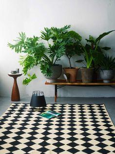 Plantes sur un banc en bois