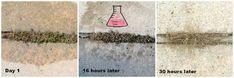 DIY Homemade Weed Killer (Also Good For Ants!) DIY Homemade Weed Killer (Also Good For Ants!),Weed killer homemade This Homemade Weed Killer Has One Super Surprising Ingredient – This is cheap, easy and can. Home Design, Weed Killer Homemade, Wooden Plant Stands, Vegetable Garden Tips, Hosta Plants, Pink Lemon, Raised Planter, Wooden Flowers, Wooden Hangers