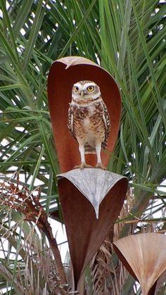 Nature made umbrella. Smart Owl.