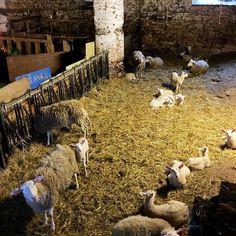 (@moekeyarns) mill in Belgium - La Filature du Hibou  I