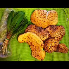 Gorgeous selection of wild harvested Dryad's Saddle mushrooms and ramps that my friend, Nathalia, generously gave us today! MMM   Copyright © 2014 Tofu Fairy's Brain Pile - All Rights Reserved   Copyrigh...