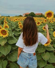 Falling in love with sunflowers