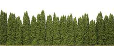 Ideas For Backyard Privacy Landscaping Trees Courtyards Backyard Trees, Landscaping Trees, Privacy Landscaping, Backyard Privacy, Backyard Patio, Outdoor Privacy, Wedding Backyard, Texas Landscaping, Modern Backyard