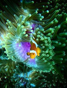 Tioman reef freedive