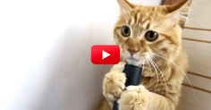 This Cat Got Ahold Of A Vacuum And What He Did With It Is So Funny! | The Animal Rescue Site Blog